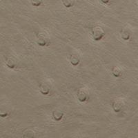 exotic - sandstone ostrich